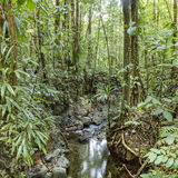 Dense jungle with small creek Stock Images