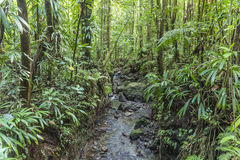 Dense jungle with small creek Royalty Free Stock Photography
