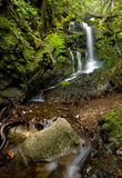 Dense Lush Forest and Waterfall Stock Images
