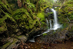 Dense Lush Forest and Waterfall Royalty Free Stock Photography