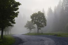 Dense mist morning in the forest. Winding road among the trees . Forest in the fog. Spring in the Carpathian Mountains. Ukraine Stock Image