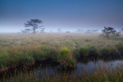 Dense mist over swamp Stock Photos