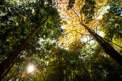 Dense mixed forest, view in summer Royalty Free Stock Photography