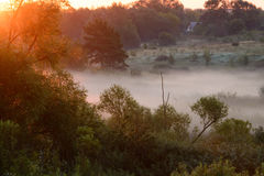 Dense morning fog in a summer forest Royalty Free Stock Images