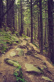 Dense mountain forest and  path between the roots of trees. Landscape dense mountain forest and stone path between the roots of trees Stock Photo