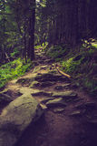 Dense mountain forest and  path between the roots of trees. Landscape dense mountain forest and stone path between the roots of trees Stock Images