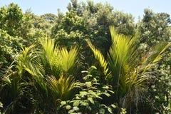 Dense New Zealand bush. Dense green plants growth on Waiheke Island in summer Royalty Free Stock Images