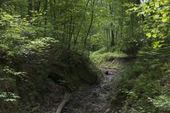 Dense forest landscape with stream Stock Images