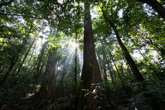 Dense rain forest Stock Photography