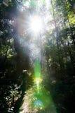 Dense rain forest photographer light fair Stock Photography