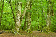 Dense Rainforest Royalty Free Stock Images