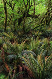 Dense rainforest with ferns and trees Stock Photos