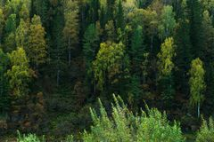 Dense Siberian forest Royalty Free Stock Images