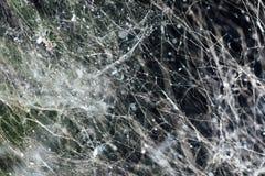 Dense spider web background. Abstract dense spider web background Stock Photos