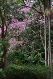 Dense subtropical greenery Stock Images
