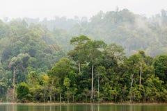 Dense tropical forest Stock Photos