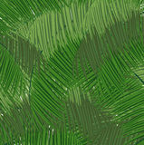 Dense tropical forest Royalty Free Stock Image