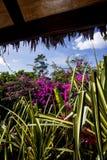 Dense tropical garden Royalty Free Stock Images