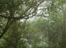 Dense Tropical Jungle Royalty Free Stock Photos