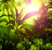 Dense tropical rainforest Stock Photos