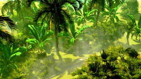 Dense tropical rainforest. Morning fog in dense tropical rainforest Royalty Free Stock Images
