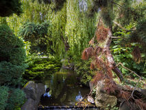 Dense variety of foliage surrounding a beautiful stream. Trees, bushes and hanging branches framing a little stream to show the beauty in nature Stock Photo