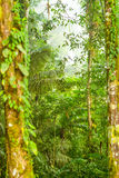 Dense Vegetation Andean Cloud Forest Royalty Free Stock Images