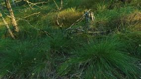 Dense vegetation on the forest edge stock footage