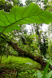Dense vegetation Royalty Free Stock Photos
