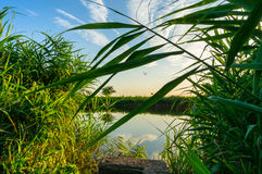 Dense vegetation on lake shore Royalty Free Stock Images