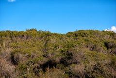 Dense vegetation Stock Photos