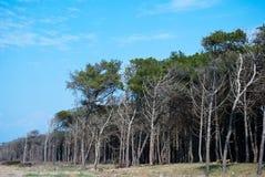 Dense vegetation Royalty Free Stock Photo