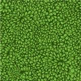 Dense vegetation pattern Royalty Free Stock Images
