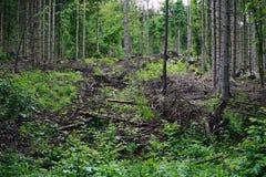 Dense vegetation Stock Photography