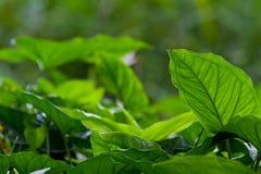 Dense vegetation Stock Images