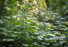 Dense and wet sunlit bushes Royalty Free Stock Images