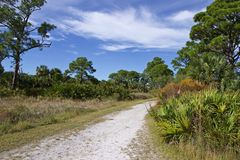 Dense woods along a sandy path stock image