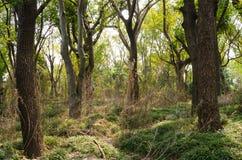 Dense woods. At noon, dense woods, backlit film Stock Photos