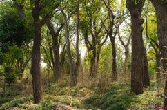 Dense woods. At noon, dense woods, backlit film Royalty Free Stock Photo