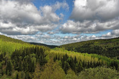 Densely grown trees in the mountain Royalty Free Stock Image
