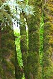 Densely mossed trees - abstract Stock Images