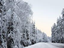 dentäckte skogvägen mellan snöig granträd och sörjer i en vinterskog i den iskalla misten Arkivfoto