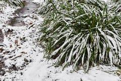 dentäckte tofsen av gräs och den lilla strömmen i is i stad parkerar i dimmig morgon fotografering för bildbyråer