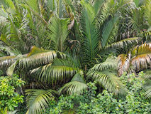 Dent palm tree background Stock Photos