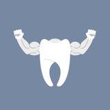 Dent saine intense Dent propre blanche avec de grands muscles Logo f Photos libres de droits