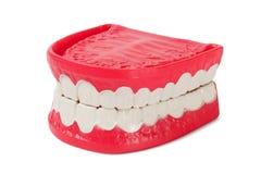 Dentadura en blanco Foto de archivo libre de regalías