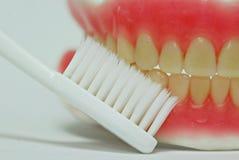 Dentadura, modelo de los dientes con el cepillo de dientes Fotografía de archivo