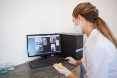 Dental assistant looking at x-rays on computer Royalty Free Stock Photography