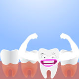 Dental cartoon , tooth grow. On blue background Stock Photography