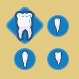 Dental design. Over beige background, vector illustration Royalty Free Stock Photo